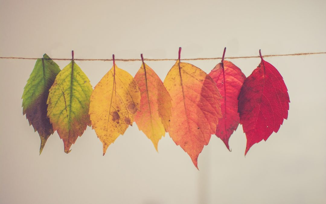 Making the Transition from Summer to Fall: Setting New Goals and Finding New Routines